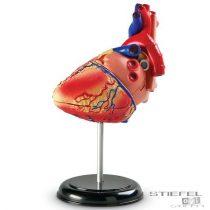 Puzzle model biologic - Inima