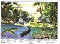 FIXI - Flora și fauna apelor curgătoare