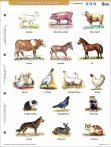 HÁZ KÖRÜL ÉLŐ ÁLLATOK + MUNKAOLDAL TANULÓI MUNKALAP- Animale domestice- fișă de studiu și de lucru