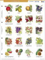 GYÜMÖLCSÖK + MUNKAOLDAL TANULÓI MUNKALAP-Fructele- fișă de studiu și de lucru